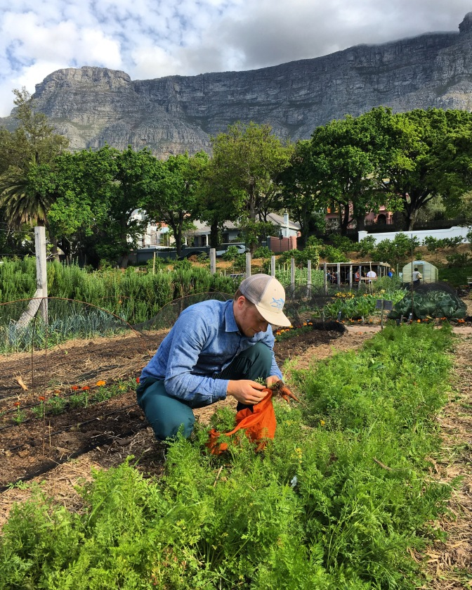 Cape Town's farmers' and night markets